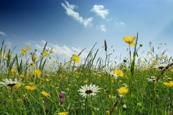 Лечение простаты травами и растениями